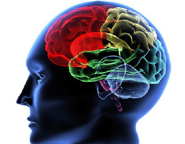 havana-live-neurologia