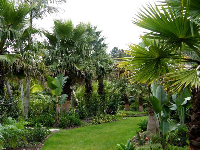 havana-live-palmengarden