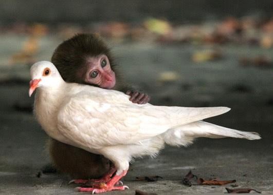havana-live-amor-animales
