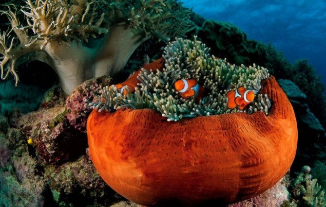 havana-live-coral-reef