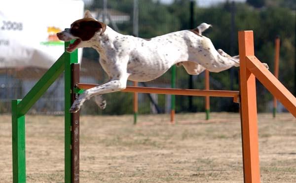 Ejercicios-agility-para-perros