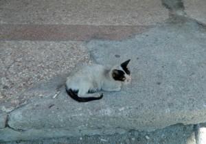 Las-calles-de-La-Habana-están-llenas-de-perros-y-gatos-abandonados-muchos-en-estado-deplorable.-Foto-P.-Chang-722x505