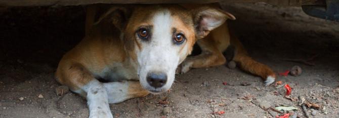 havana-live-perros abandonado