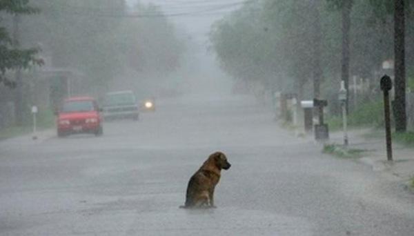 havana-live-perro-abandonado-bajo-la-lluvia