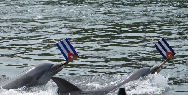 havana-live-delphinario