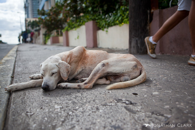 havana-cuba-sleeping-homeless-dog-photo-by-jonathan-clark