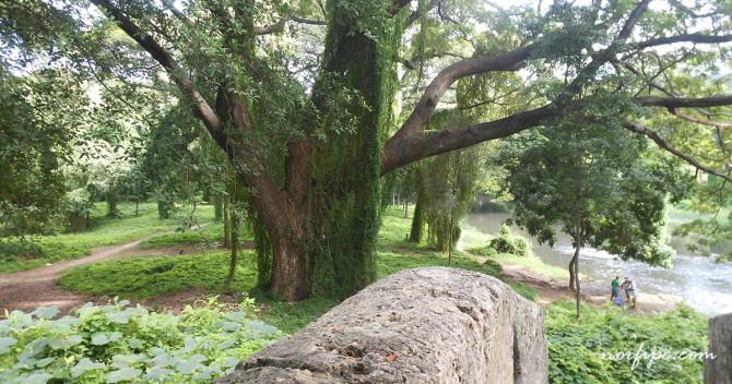 havana-live-parque-almendares-paisaje-mirador