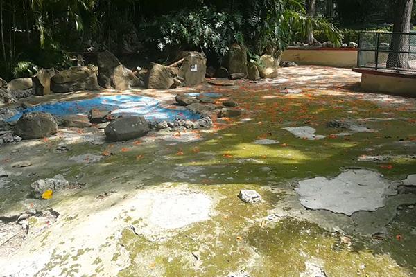 havana-live-estanque-del-zoologico-26-vacio