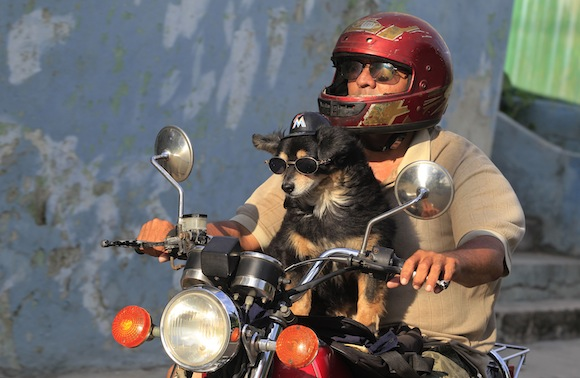 Popy, a 14-year-old dog, enjoys the ride as his owner Abel cruises around Havana June 13, 2013. REUTERS/Enrique De La Osa (CUBA)