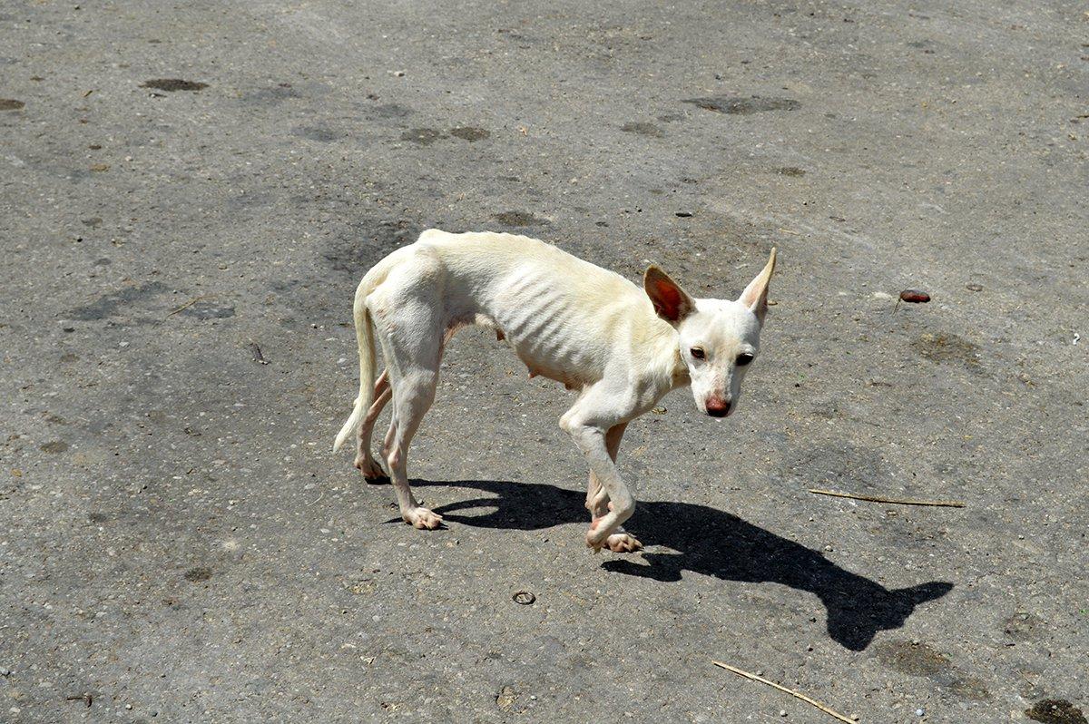 Resultado de imagen para PERRO callejero cubano