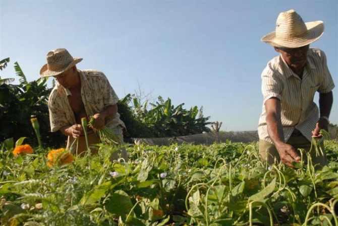 agricultura,urbana,suburbana,Cuba