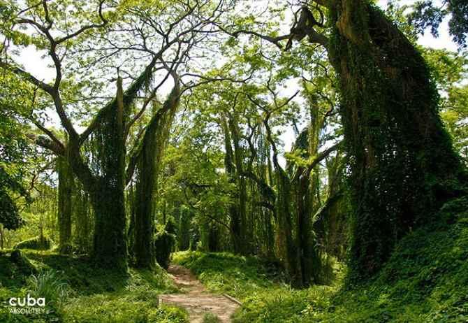 Se desarrollará en La Habana IV Festival Bambú Parque