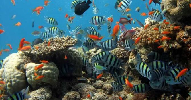 sistemas de arrecifes coralinos,Parques Nacionales de EE.UU.,Santuario Marino Nacional de los Cayos de Florida, Acuario Nacional.Cuba