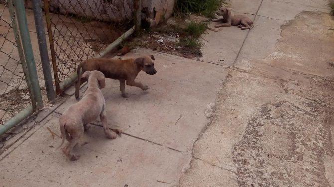 Madre y sus cinco cachorros en peligro de ser capturados por Zoonosis