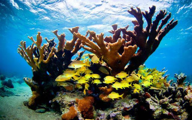 Científicos de una expedición conjunta cubano-estadounidense encontraron arrecifes saludables alrededor de Cuba