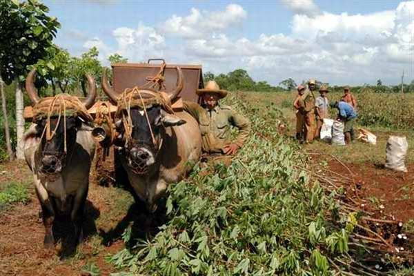 Gobierno busca impulsar sector agrícola flexibilizando normas de acceso a tierras