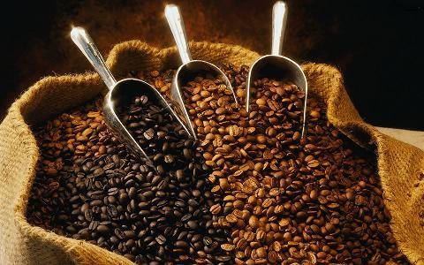 Cuba planea revivir la industria del café