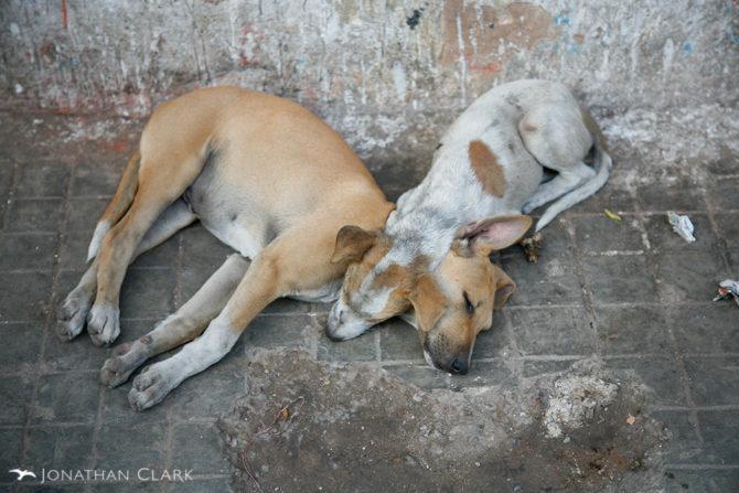 Finalmente una campaña para desparasitar y esterilizar perros en La Habana