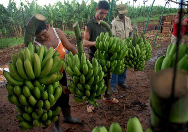Naciones Unidas y Canada invierten seis millones de dólares en la producción local de frutas