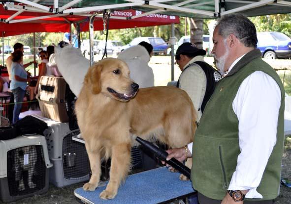 Más de 200 perros de razas puras compiten en La Habana