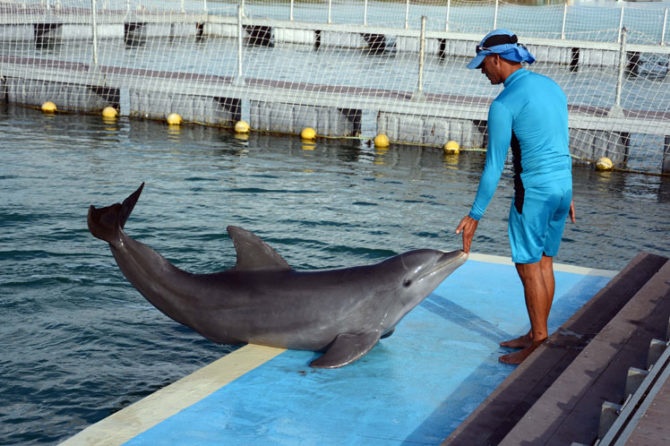 El delfinario de Cayo Guillermo abre sus puertas de nuevo