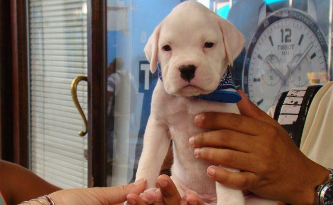 Crearán red de farmacias para mascotas en Cuba