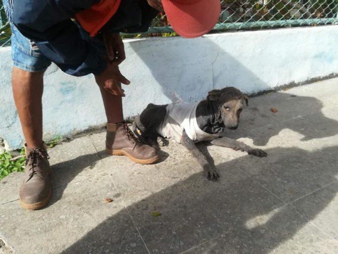 """El grupo Cubanos en Defensa de los Animales busca un hogar para """"William"""""""