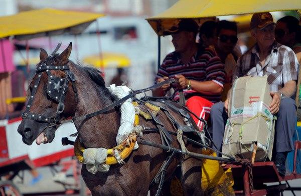 A Bayamo los caballos desprotegidos y maltratados