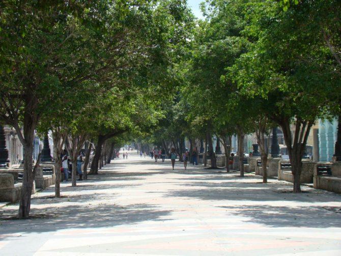 Talan los árboles de una parte del Paseo del Prado
