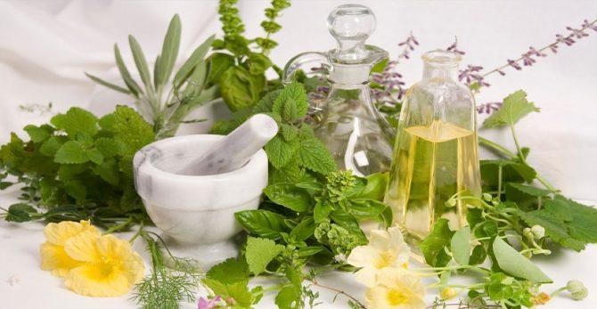 En Cuba, Congreso sobre Farmacología de Productos Naturales