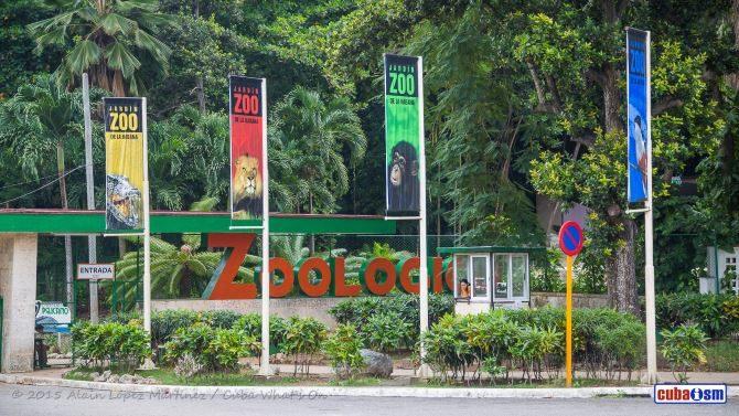 Guatemala enviará animales para el Zoológico de La Habana