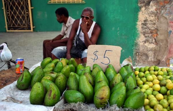 Científicos cubanos dicen tener un sistema para producir aguacate todo el año