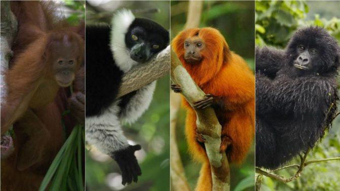 Cuba recibe 42 animales en intercambio con un zoológico de Guatemala