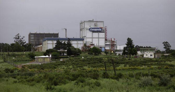 Empresa láctea de Uruguay pretende instalar fábrica en Cuba
