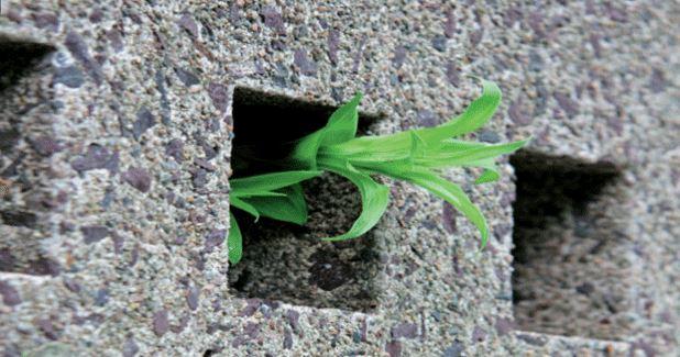 Fabrican el primer cemento ecológico de Cuba tras 10 años de investigación