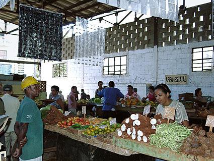 Cuba prepara leyes para regular cooperativas agrarias productoras del 92% de los alimentos