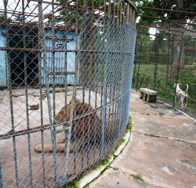 La muerte lenta de un zoológico