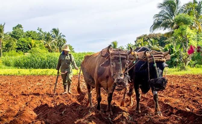 Cuba amplía entrega de tierras en usufructo para paliar déficit de alimentos
