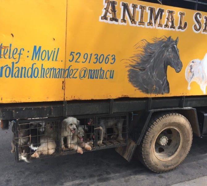 El aullido del silencio: maltrato animal en Cuba