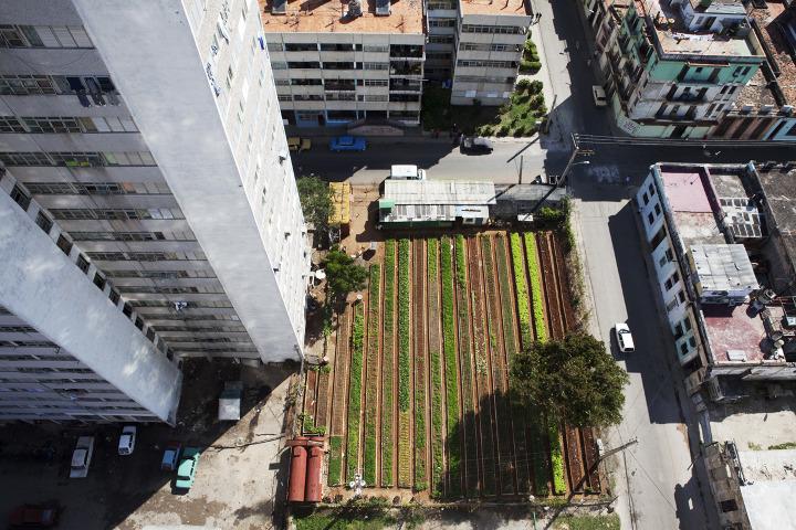 havana-live-farming5