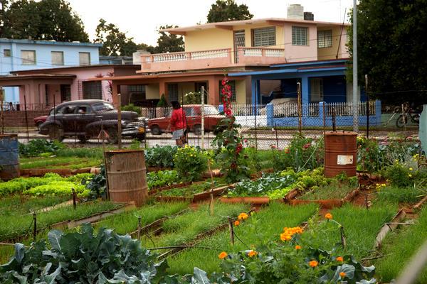 havana-live-farming4