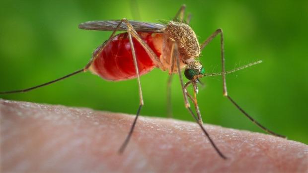 havana-live-zika