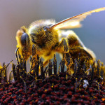 Cuba leads ecological development of beekeeping