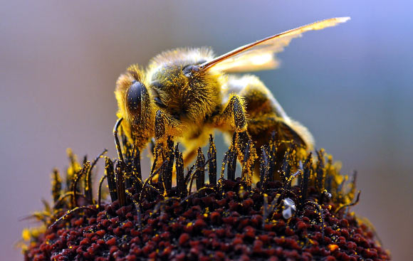 Cuba leads ecological development of beekeeping