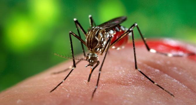 havana-live-header-zika