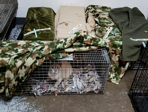 havana-live-cat-trap