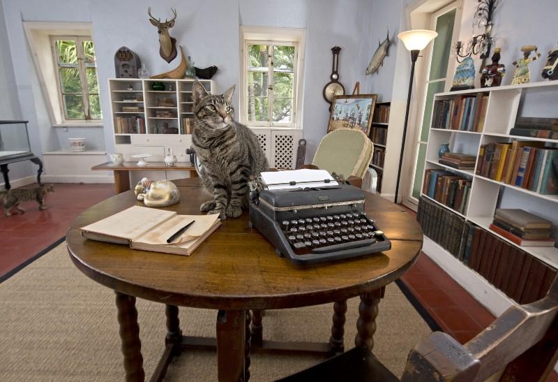 Cuba,cats,Havana,Hemingway,Aniplant