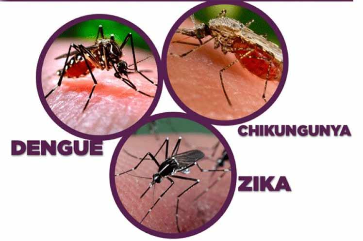 Cuba, diseases,dengue,zika,chikungunya