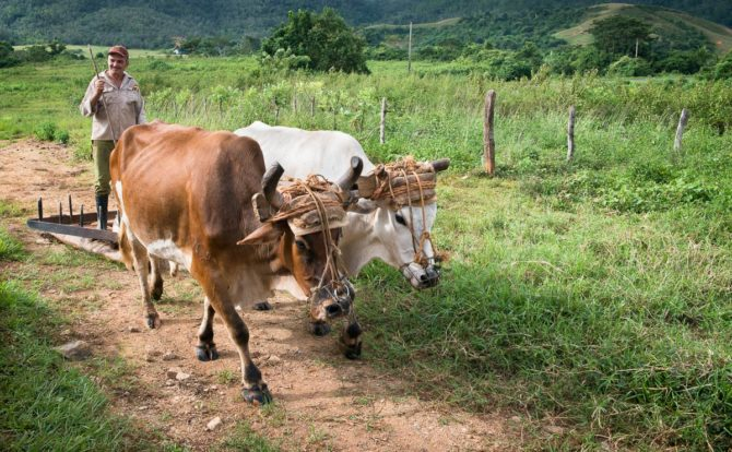 Cuba to tax on idle lands in order to increase food production