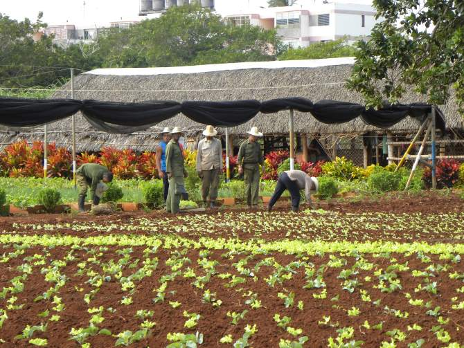 Finca Slow! The New Slow Food Cuba Project